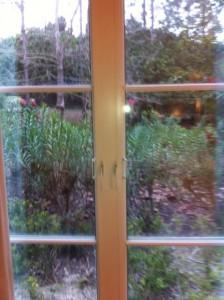 View out of my window at Loews Portofino Bay Resort at Universal Orlando